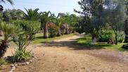 Location vacances Santa Maria Poggio (20221)