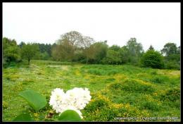 Achat Terrain Chateauneuf sur Sarthe