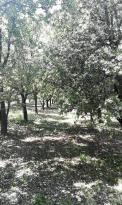 Achat Terrain Camaret sur Aigues
