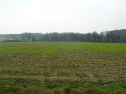 Achat Terrain Plumelec