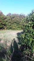Achat Terrain Meschers sur Gironde