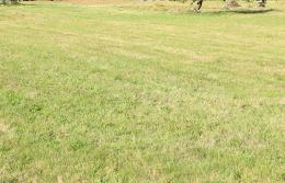 Terrain Granges sur Vologne &bull; <span class='offer-area-number'>1 330</span> m² environ