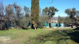 Achat Terrain Les Olives