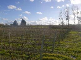 Achat Terrain Montjean sur Loire