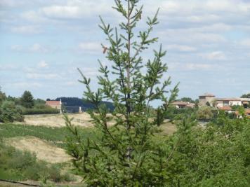 Terrain Ville sur Jarnioux &bull; <span class='offer-area-number'>659</span> m² environ