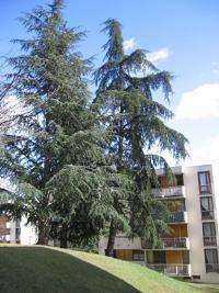Appartement Brunoy &bull; <span class='offer-area-number'>12</span> m² environ &bull; <span class='offer-rooms-number'>1</span> pièce