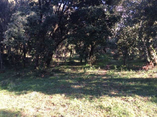 Terrain  1 748 m² environ Cauro