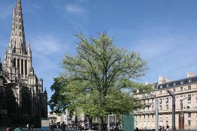 Bordeaux caud ran saint augustin avec ou sans tramway for Agence immobiliere bordeaux saint augustin