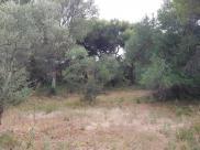 Terrain Loupian
