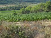 Terrain Pouzols Minervois • 360 000 m² environ