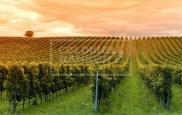 Propriété viticole St Emilion • 8 p.