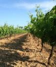 Propriété viticole Montpellier • 550m² • 6 p.