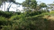 Terrain Anglet • 1 877 m² environ